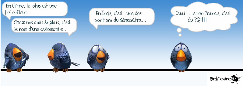 http://pat.yakafair.com/wp-content/uploads/2013/02/oiseaux-humour-lotus.png