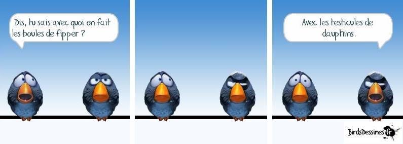 BIRDS TESTICULES