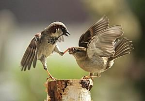Couple-oiseaux