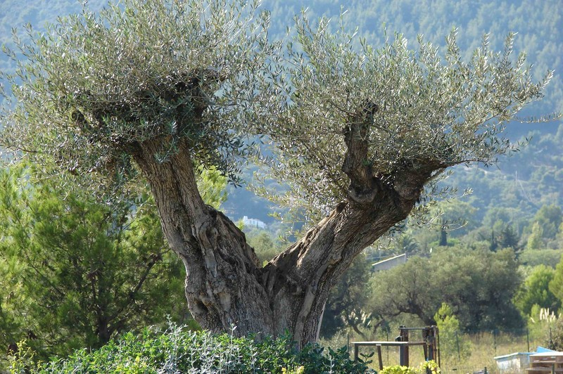 jo tourist olivier