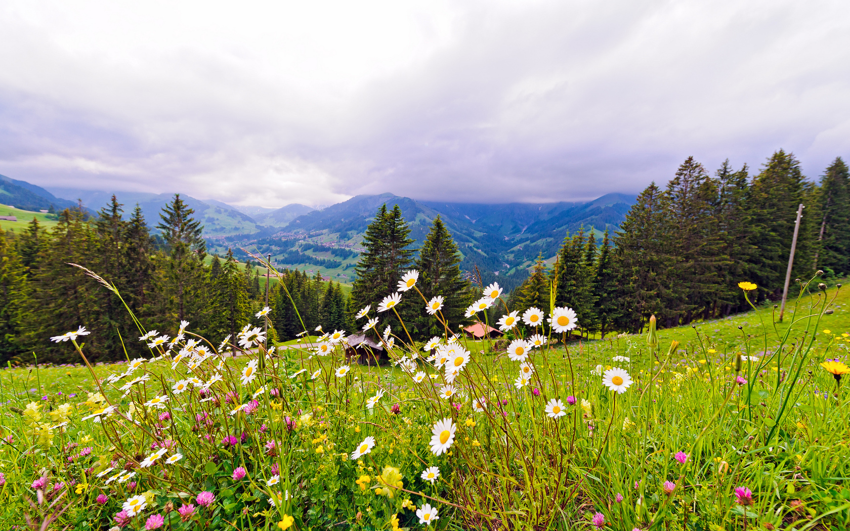 alpage fleurit