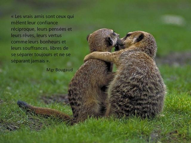 'les_vrais_amis'